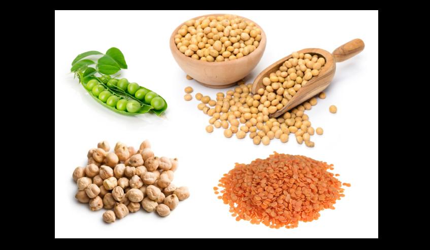 Les légumineuses les plus présentes dans les aliments pour chiens et chats : Pois, pois chiches, lentilles, luzerne et soja.
