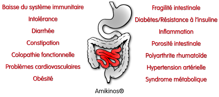 Liste des symptômes d'une flore intestinale déréglée : Baisse du système immunitaire intolérance diarrhée constipation colopathie fonctionnelle problèmes cardiovasculaires obésité, fragilité intestinale diabètes/résistance à l'insuline inflammation porosité intestinale polyarthrite rhumatoïde hypertension artérielle syndrome métabolique