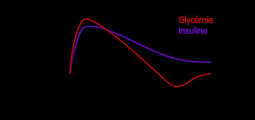 Une croquette avec un fort taux de glucides à index glycémique élevé va provoquer une augmentation du taux de glucose sanguin (glycémie) et par conséquent une grosse production d'insuline.
