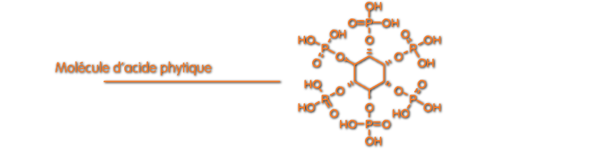 Schéma d'une molécule d'acide phytique