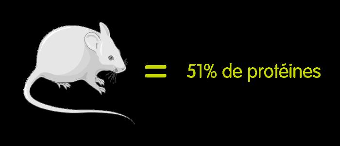 Une souris = 51% de protéines à 8% d'humidité