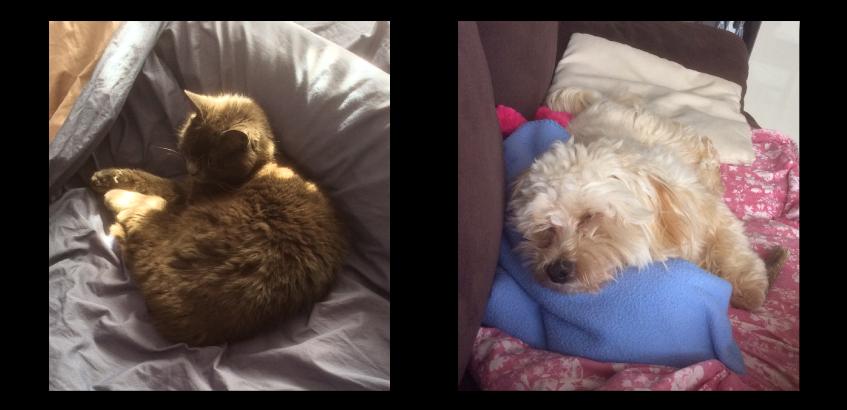 Témoignages croquettes Amikinos : photo chien et chat