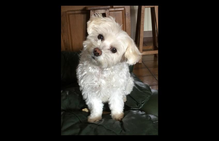 Témoignages et avis sur les croquettes Amikinos chien et chat