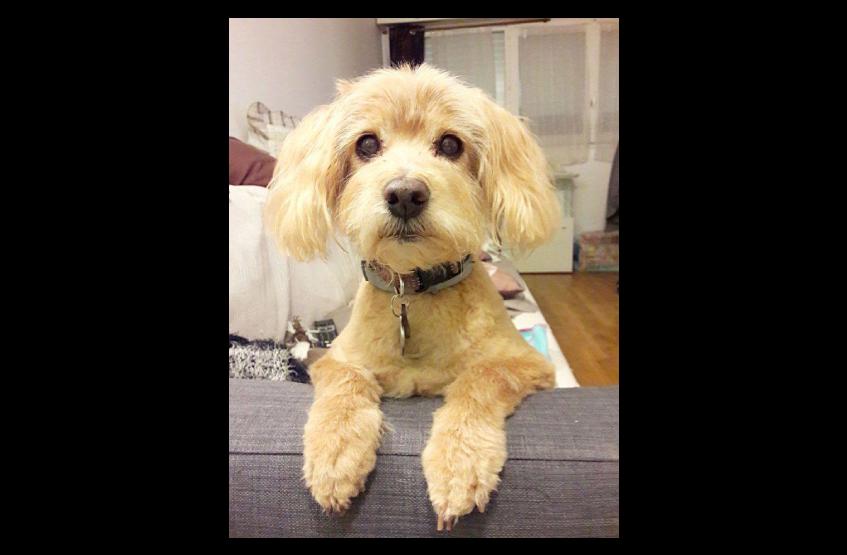 Témoignages croquettes Amikinos : photo chien