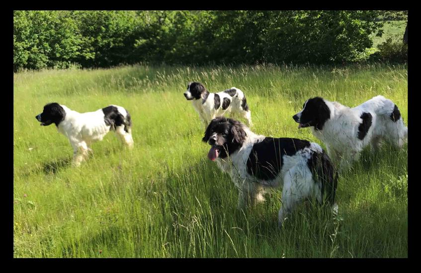 Témoignages croquettes Amikinos : photos chiens