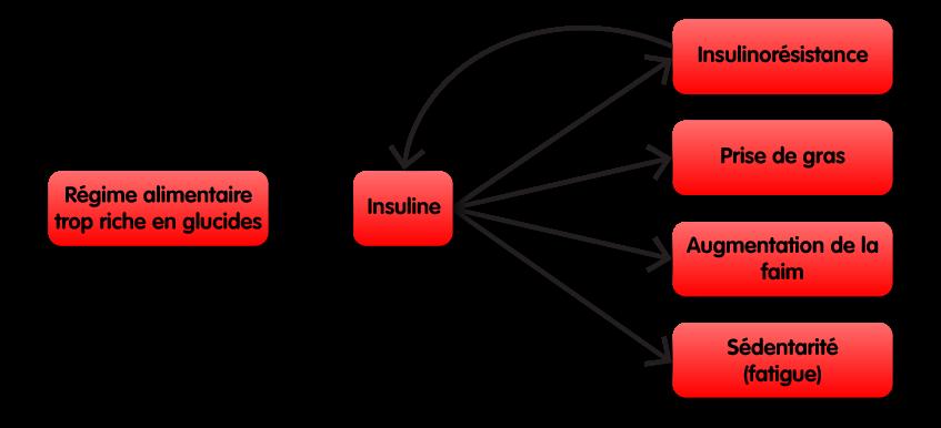 Schéma montrant comment un régime alimentaire trop riche en glucides dérègle la production hormonale d'insuline et qui à pour conséquence de l'insulino-résistance, une prise de gras, une augmentation de la faim, et de la fatigue cause de sédentarité. L'insulino-résistance va ensuite augmenter la production d'insuline avec à nouveau les mêmes conséquences.