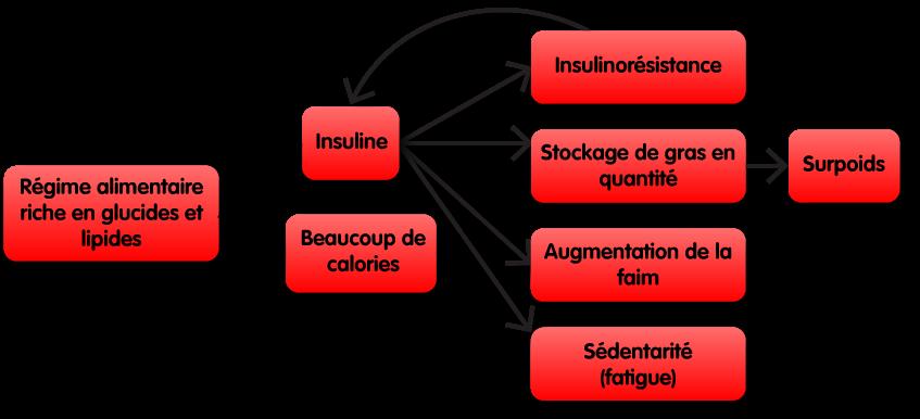 Schéma montrant comment des croquettes riches en glucides et lipides ne sont pas les meilleures croquettes pour les chiens et chats en surpoids. Elles dérèglent la production hormonale d'insuline tout en fournissant un gros apport calorique. Cela à pour conséquence de l'insulino-résistance, un stockage de gras en quantité causant du surpoids, une augmentation de la faim, et de la fatigue cause de sédentarité.