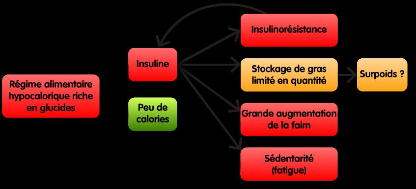 Schéma montrant comment des croquettes hypocaloriques riches en glucides ne sont pas les meilleures croquettes pour les chiens et chats en surpoids. Elles dérèglent la production hormonale d'insuline tout en limitant l'apport calorique. Cela à pour conséquence de l'insulino-résistance, un stockage de gras limité en quantité causant ou non du surpoids, une grande augmentation de la faim, et de la fatigue cause de sédentarité.